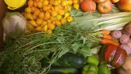 Verdura y hortaliza de huerta ecológica para los socios de la Asociación Vecinal La Paz