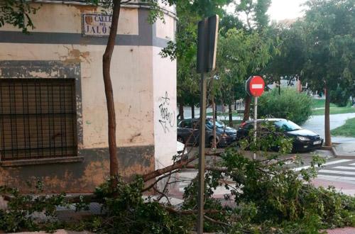 Ramas caídas en el distrito Torrero La Paz Primavera 2018