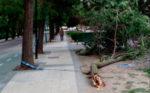 El distrito Torrero - La Paz necesita un plan de poda