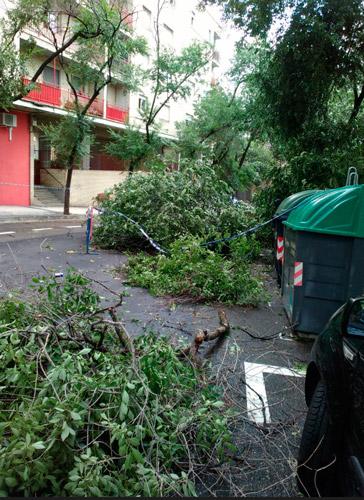 Árboles caídos en Torrero tras la tormenta del 11 de julio de 2018