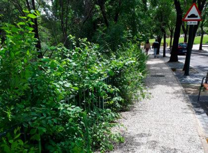 Pleno Junta - Malezas Canal