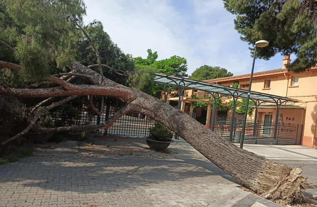 Caída de un gran árbol en una zona de riesgo del barrio