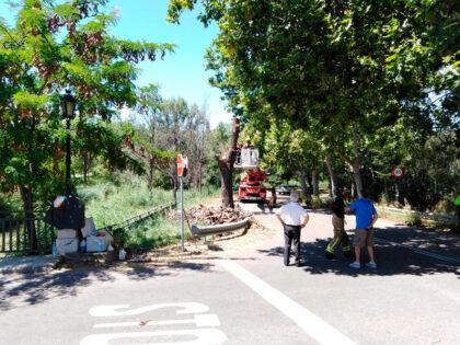 Los bomberos han talado el árbol del puente del Canal en La Paz